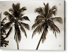 Dancing Palms Acrylic Print by Susanne Van Hulst