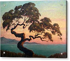Dancing Pine Acrylic Print by Michael Orwick