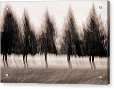 Dancing Pines Acrylic Print by Carol Leigh