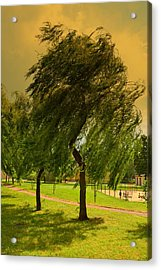 Dancing Willow Acrylic Print