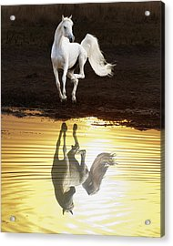 Dancing With Myself Acrylic Print by Ron  McGinnis