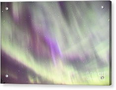 Acrylic Print featuring the photograph Dancing With The Stars by Larry Ricker