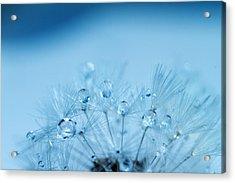 Dandelion Bouquet Acrylic Print