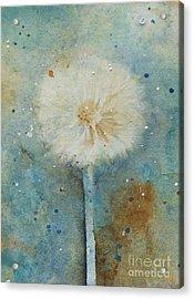 Dandelion Clock 2 Acrylic Print