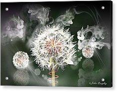 Dandelion Clock Acrylic Print