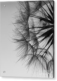 Acrylic Print featuring the photograph Dandelion Close Up by Jan Bickerton