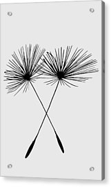Dandelion Duo  Acrylic Print