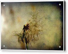 Dandelion Flower Acrylic Print by Valmir Ribeiro