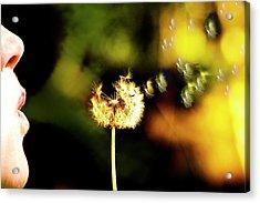 Dandelion Heart  Acrylic Print