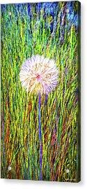 Dandelion In Glory Acrylic Print