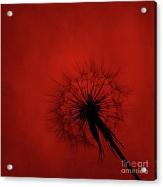 Dandelion Silhouette On Red Textured Background Acrylic Print