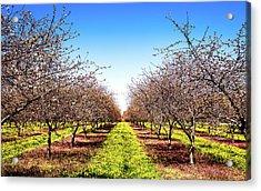 Acrylic Print featuring the photograph Dandelion Stripes by Onyonet  Photo Studios