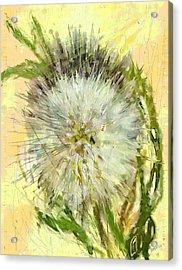 Dandelion Sunshower Acrylic Print by Desline Vitto