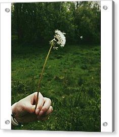 #dandelionclock #dandelion #nature Acrylic Print by Natalie Anne