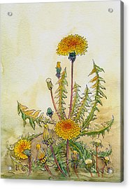 Acrylic Print featuring the painting Dandelions by Katherine Miller