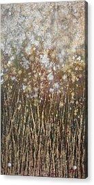 Dandelions Acrylic Print by Steve Ellis