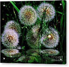 Acrylic Print featuring the photograph Dandies  by Elfriede Fulda