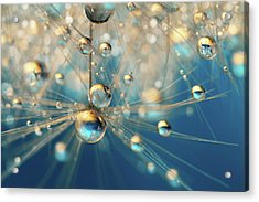 Acrylic Print featuring the photograph Dandy Drops In Royal Blue by Sharon Johnstone