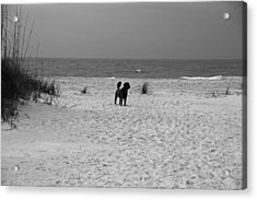 Dandy On The Beach Acrylic Print by Michiale Schneider