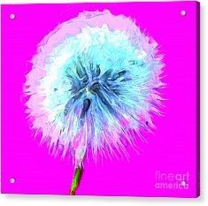 Dandylioness Acrylic Print
