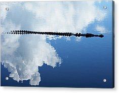 Acrylic Print featuring the photograph Dangerous Reflection Saltwater Crocodile by Gary Crockett