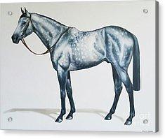 Dapple Gray Acrylic Print