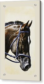 Dark Bay Dressage Horse Phone Case Acrylic Print by Crista Forest