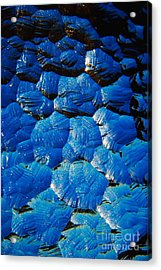 Dark Blue Acrylic Print by Hideaki Sakurai