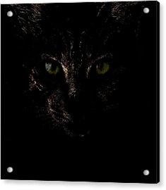 Dark Knight Acrylic Print by Helga Novelli