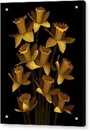 Dark Daffodils Acrylic Print by Marsha Tudor