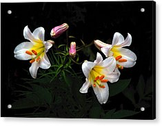 Acrylic Print featuring the photograph Dark Day Bright Lilies by Byron Varvarigos
