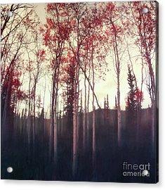 Dark Deep Woods Acrylic Print