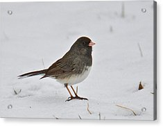 Acrylic Print featuring the photograph Dark-eyed Junco 1217 by Michael Peychich