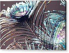 Dark Feathers Acrylic Print