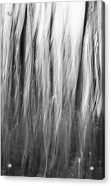 Dark Forest Abstractions Acrylic Print