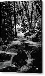 Dark Forest Bright Water Acrylic Print
