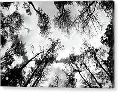 Dark Forest Acrylic Print by Janzgrossetkino