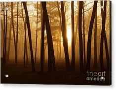 Dark Forest Acrylic Print by Terri Gostola
