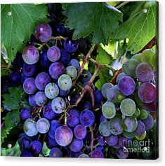 Acrylic Print featuring the photograph Dark Grapes by Carol Sweetwood