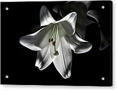 Dark Lilly Acrylic Print