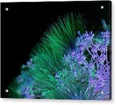Dark Mimosa Acrylic Print by James Granberry
