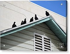 Dark Pigeons Acrylic Print