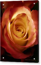 Dark Rose Acrylic Print