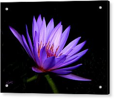 Dark Side Of The Purple Water Lily Acrylic Print