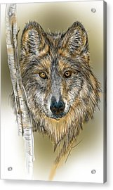 Acrylic Print featuring the digital art Dark Wolf With Birch by Darren Cannell