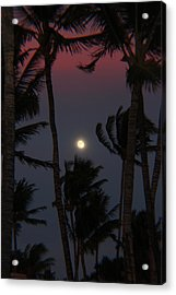 Darkness Acrylic Print by Raquel Amaral