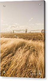 Darling Downs Rural Field Acrylic Print by Jorgo Photography - Wall Art Gallery
