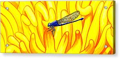 Darning Needle Acrylic Print by Catherine G McElroy