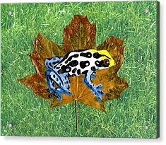Dart Poison Frog Acrylic Print