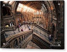 Darwin And Friends Acrylic Print by Giuseppe Torre